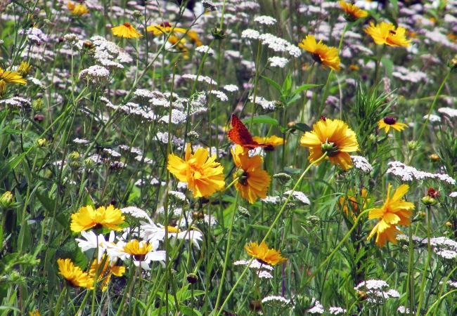 Growing A Meadow, Large or Small
