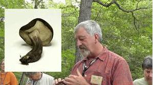 Mushroom Hunting & Amateur Mycology