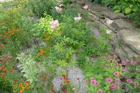 Rain Gardens with Donna Katsuranis