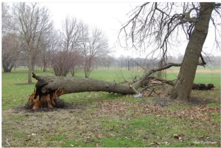 Tree Risk: How Trees Stand Up