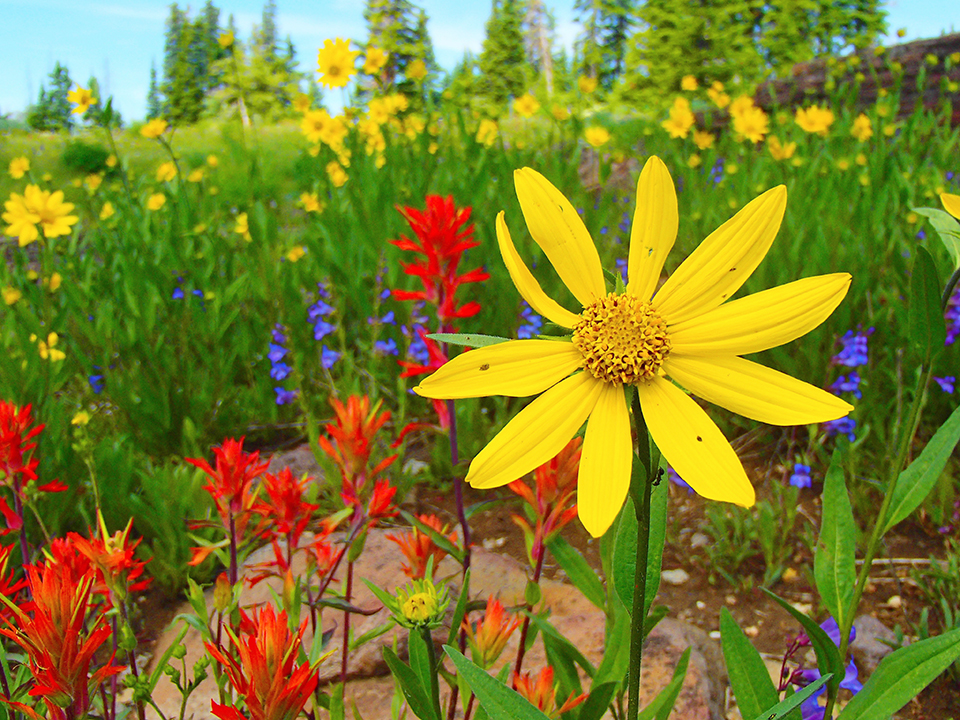 Using Newcomb's Wildflower Guide & Wildflower Field Walk