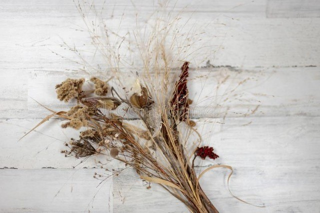 Winter ID of Wild Herbaceous Plants
