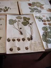 NYBG Herbarium Visit