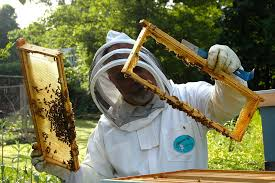 Beekeeping Through the Year: Part 2