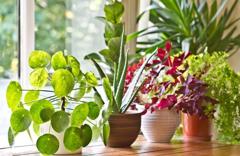 Happy Houseplants: Gardening Indoors