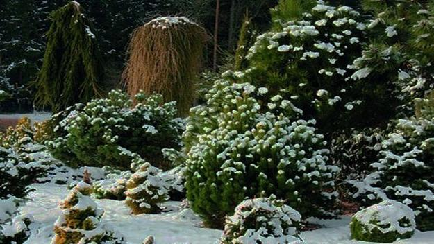 Webinar: Foundation Gardens and Native Plants: A Winter View